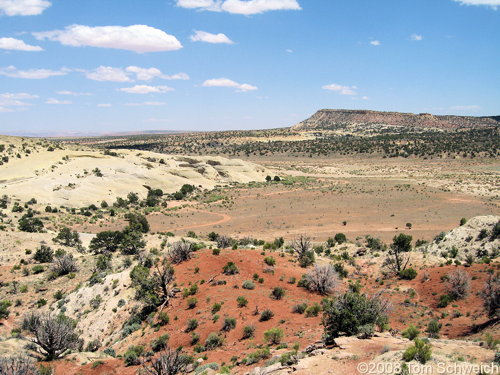 Utah, Garfield County, Left Hand Collet Canyon