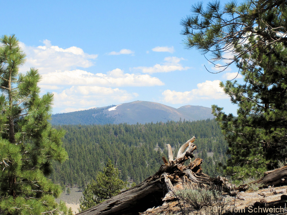California, Mono County, Bald Mountain