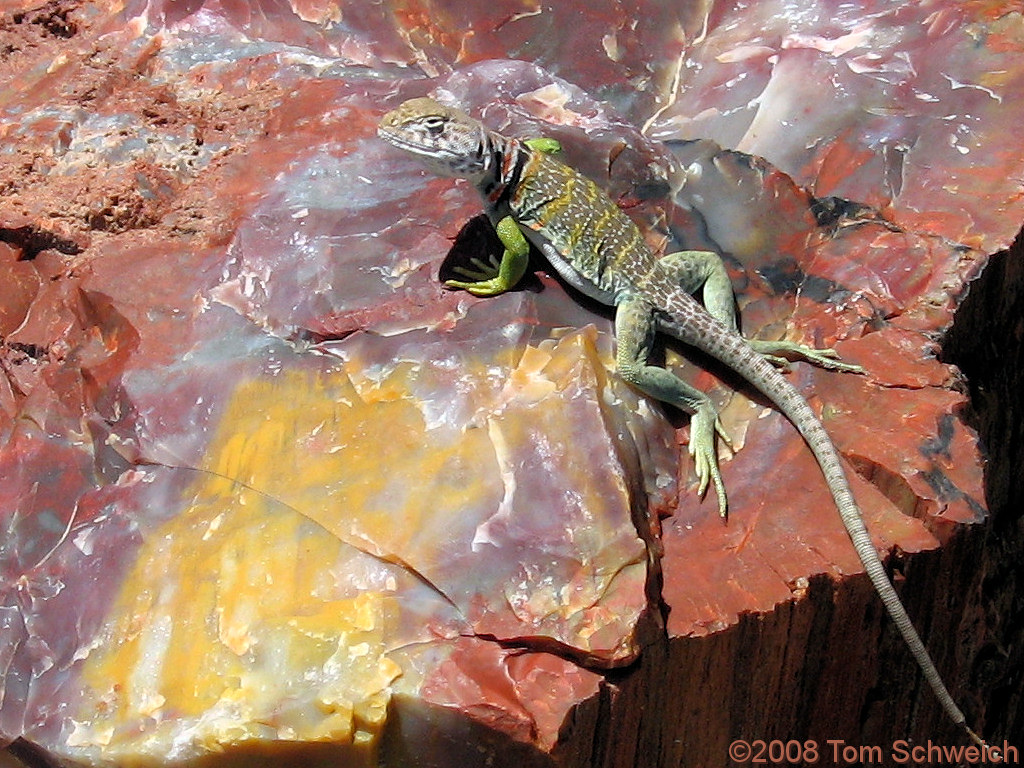 Hey baby! … want a date? Arizona, Apache County, Petrified Forest National Park